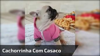 Cachorrinha Mais Fofinha, Toda Estilosa Com Seu Casaquinho Rosinha!