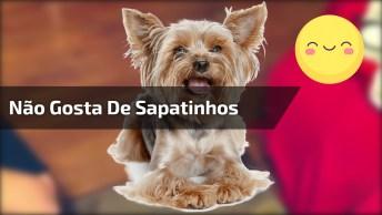 Cachorrinha Não Gosta De Sapatinhos, Veja Como Ela Fica!