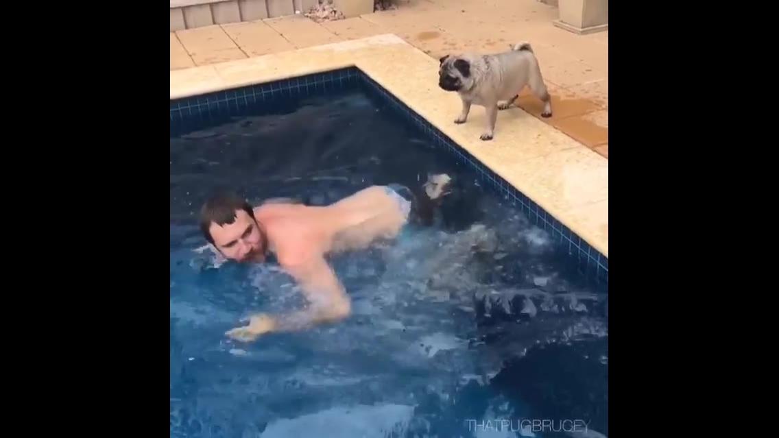 Cachorrinha pega carona nas costas de seu dono para travesar piscina
