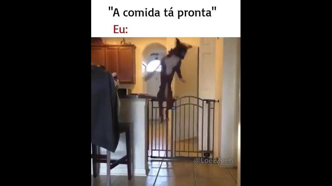 Cachorrinha pula com maior facilidade o portão olha só que arteira