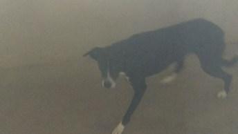 Cachorrinha Que Foi Resgatada, Ainda Esta Com Pouco De Medo E Assustada!