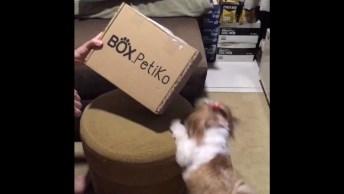 Cachorrinha Recebendo Sua Caixinha Do Correio, Com Direito A Dublagem!