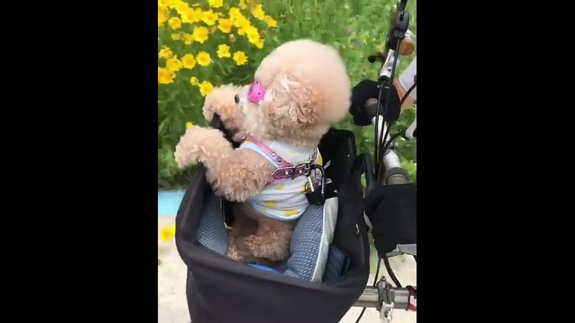 Cachorrinha toda estilosa em cestinha de bicicleta