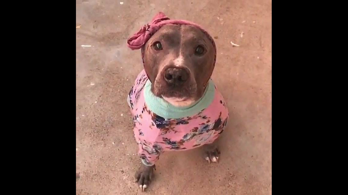 Cachorrinha vestida com roupinha rosa e faixa na cabeça