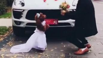 Cachorrinha Vestida De Noiva Deixa Humano No Vácuo E Foge Sem Olhar Para Trás!