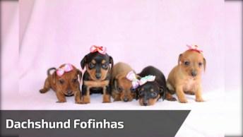 Cachorrinhas Lindas Com Lacinhos, Olha Só Como São Meiguinhas!
