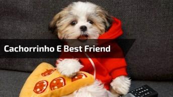 Cachorrinho Acha Seu Melhor Amigo Nos Brinquedos, Mas Quando Coloca Uma Pizza. . .