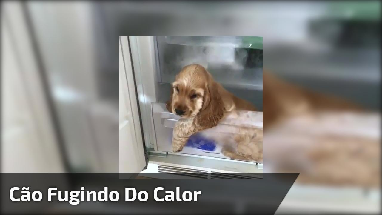 Cão fugindo do calor