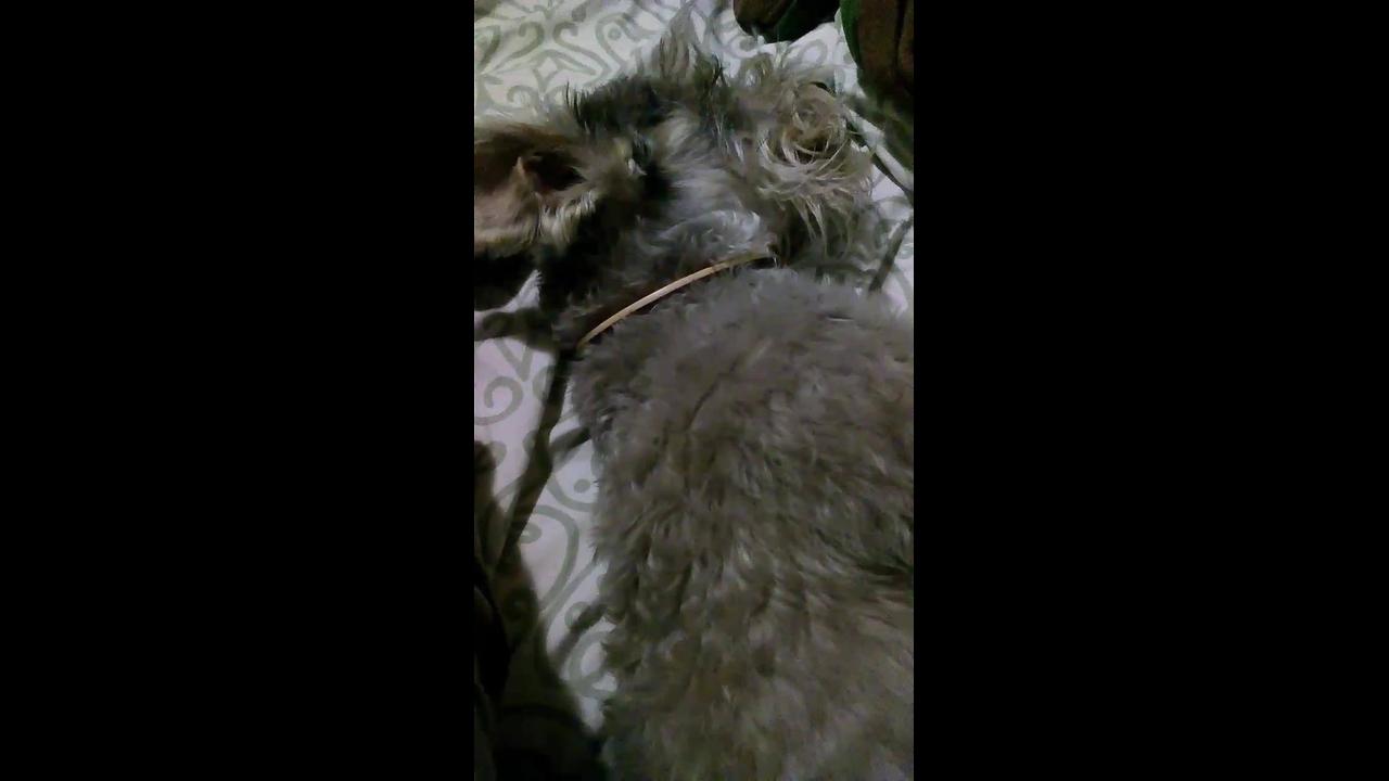 Cachorrinho acorda apenas com cheiro do petisco