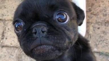 Cachorrinho Adora Biscoitinho, Olha Só A Carinha Dele Com Estes Olhos Regalados!