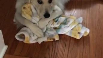 Cachorrinho Adora Sua Cobertinha, Olha Só Como Ele Abrasa Ela, Que Fofo!