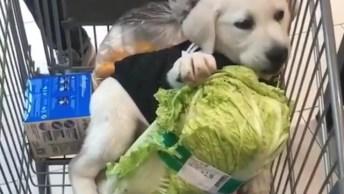 Cachorrinho Adorável Comendo Alface No Carrinho Do Supermercado!