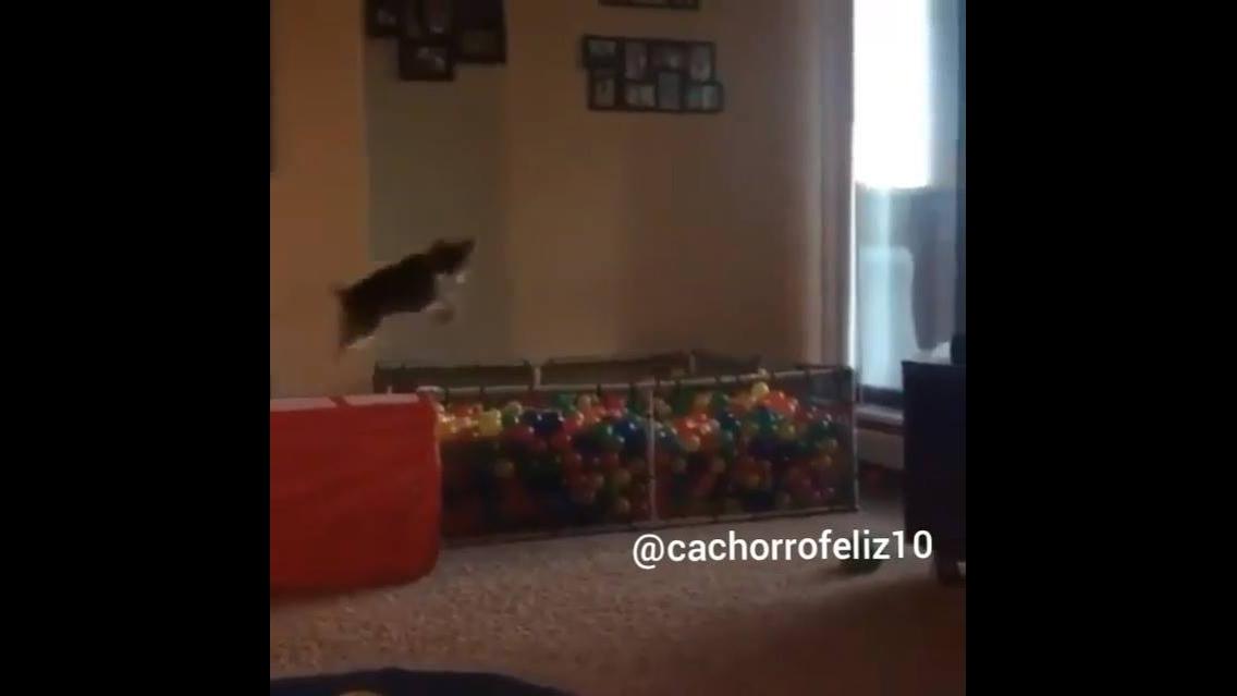 Cachorrinho alegre com sua piscina de bolinha