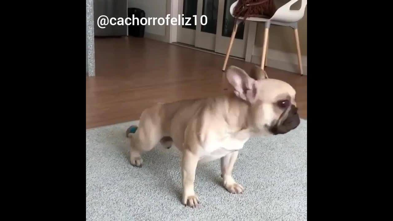 Cachorrinho alongando, esse sabe bem como começar o dia
