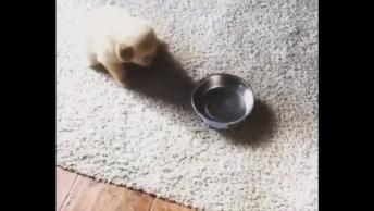 Cachorrinho Andando Com Sua Vasinha Na Boca Pedindo Comidinha!