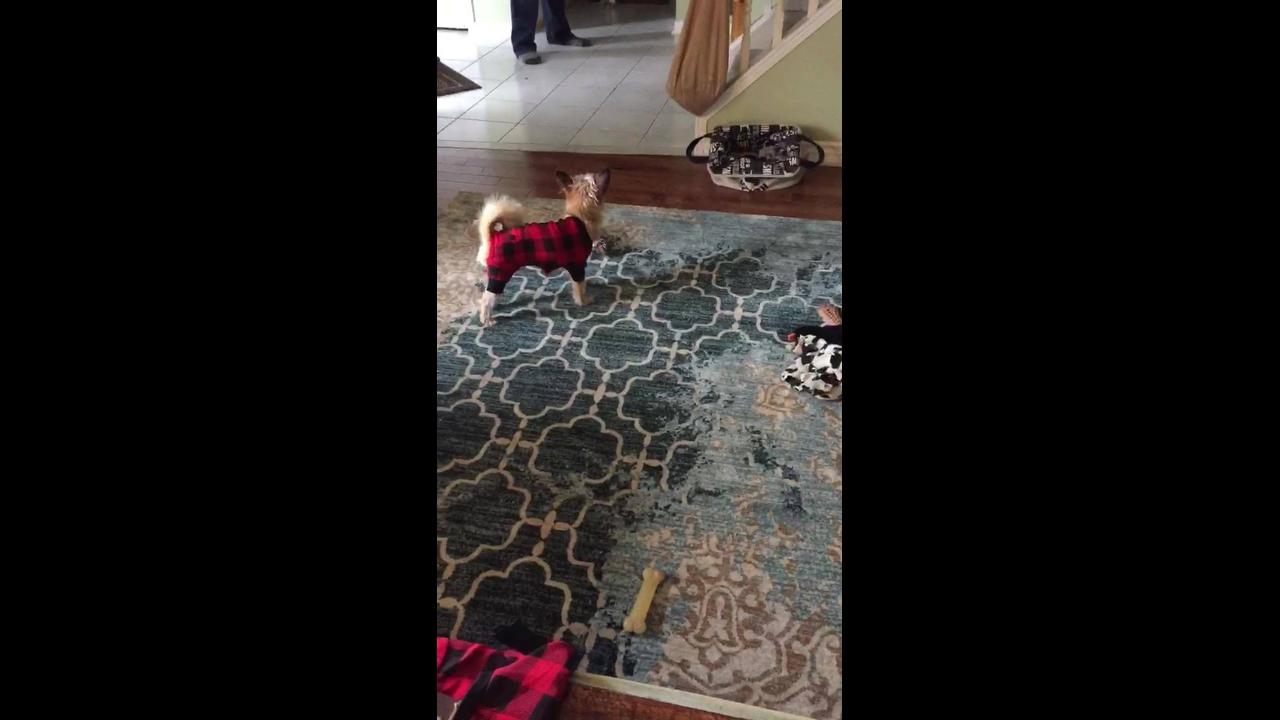 Cachorrinho andando de lado