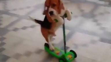 Cachorrinho Andando De Patinete, Que Belezinha, Confira!