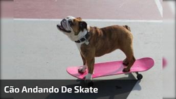 Cachorrinho Andando De Skate, Olha Só Como Ele Manda Bem Neste Esporte!