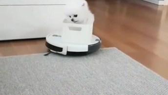 Cachorrinho Andando Em Cima Do Limpador De Chão, Olha Só A Carinha Dele!
