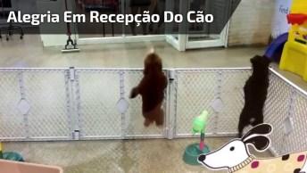 Cachorrinho Animado Porque A Mamãe Chegou, Olha Só A Alegria Dele!
