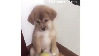 Cachorrinho Apelando Com A Carinha Triste Depois De Leva Bronca!
