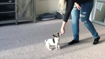 Cachorrinho Aprendendo A Dar A Patinha, Esse Vídeo É Muito Fofo!