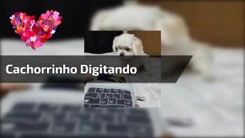 Cachorrinho Aprendendo A Usar Computador, Kkk! Veja Como Ele Digita Rápido!