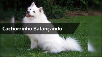 Cachorrinho Balançando, Olha A Calma Deste Animalzinho, Muito Fofo!