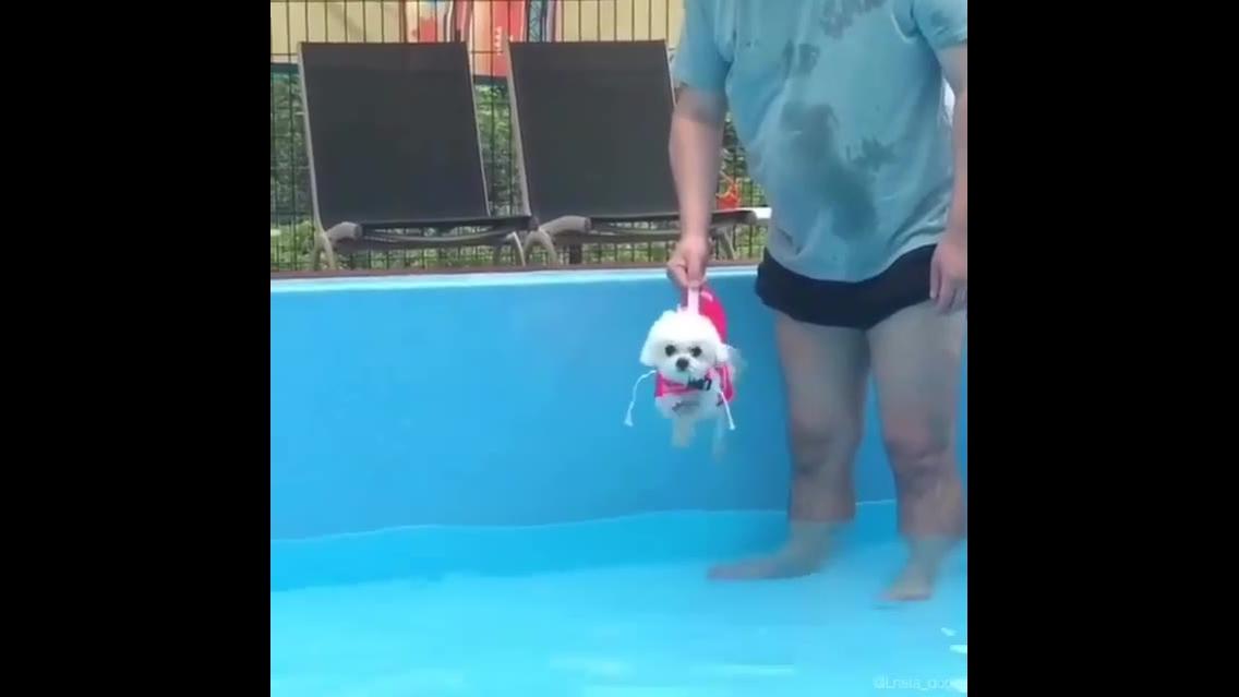 Cachorrinho bate as patinhas antes mesmo de entrar na água
