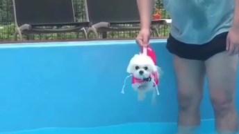 Cachorrinho Bate As Patinhas Antes Mesmo De Entrar Na Água!