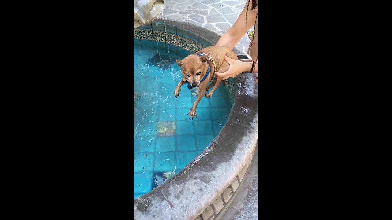 Cachorrinho bate as patinhas para nadar antes mesmo de entrar na água!!!