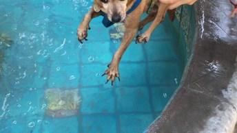 Cachorrinho Bate As Patinhas Para Nadar Antes Mesmo De Entrar Na Água!