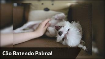 Cachorrinho Batendo Palminha, Veja Que Coisinha Mais Lindinha!