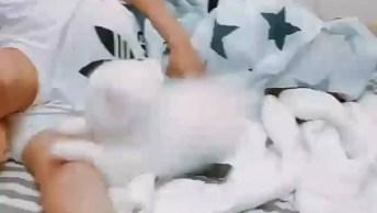 Cachorrinho Branco Super Fofo Tentando Acordar O Humano!