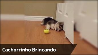 Cachorrinho Brincando Com A Bola, Olha Só Que Coisinha Mais Engraçadinha!