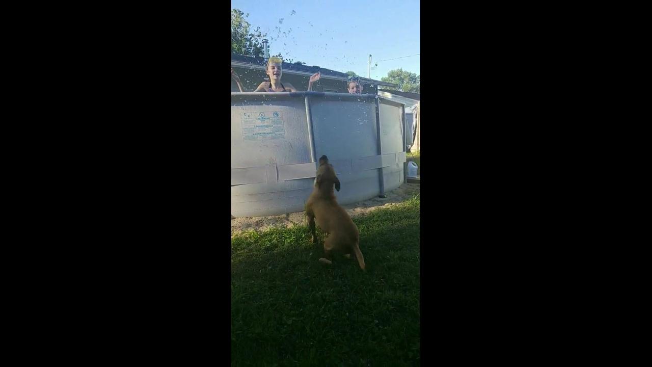 Cachorrinho brincando com água
