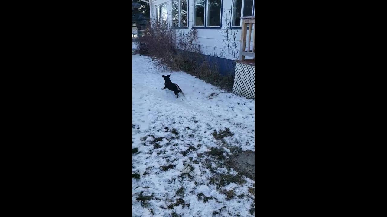 Cachorrinho brincando com bola de futebol americano na neve