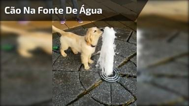 Cachorrinho Brincando Com Fonte De Água, Olha Só A Alegria Do Animalzinho!