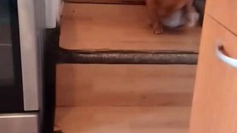 Cachorrinho Brincando Com Garrafa Plástica, Que Luta Hein!