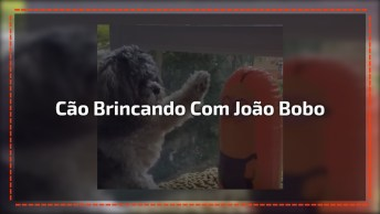 Cachorrinho Brincando Com João Bobo Dos Minions, Veja Como Ele Se Diverte!