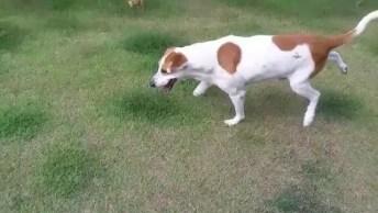 Cachorrinho Brincando Com Os Cães, Eles Só Mexe A Parte Esquerda Do Corpo!