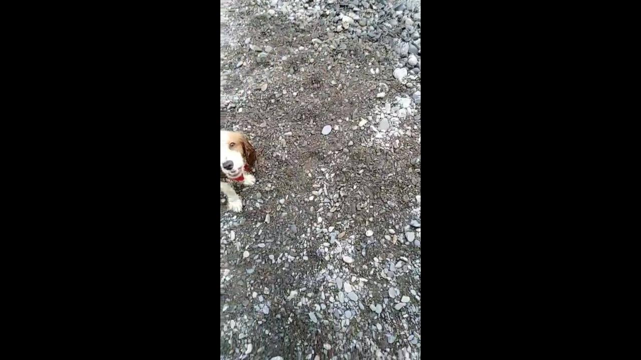 Cachorrinho brincando com seu dono