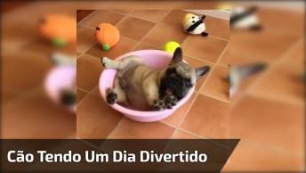 Cachorrinho Brincando Com Seus Brinquedinhos, Olha Só Que Coisinha Mais Fofa!