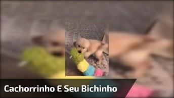 Cachorrinho Brincando Com Sua Centopeia De Pelúcia, Olha Só Que Fofo!
