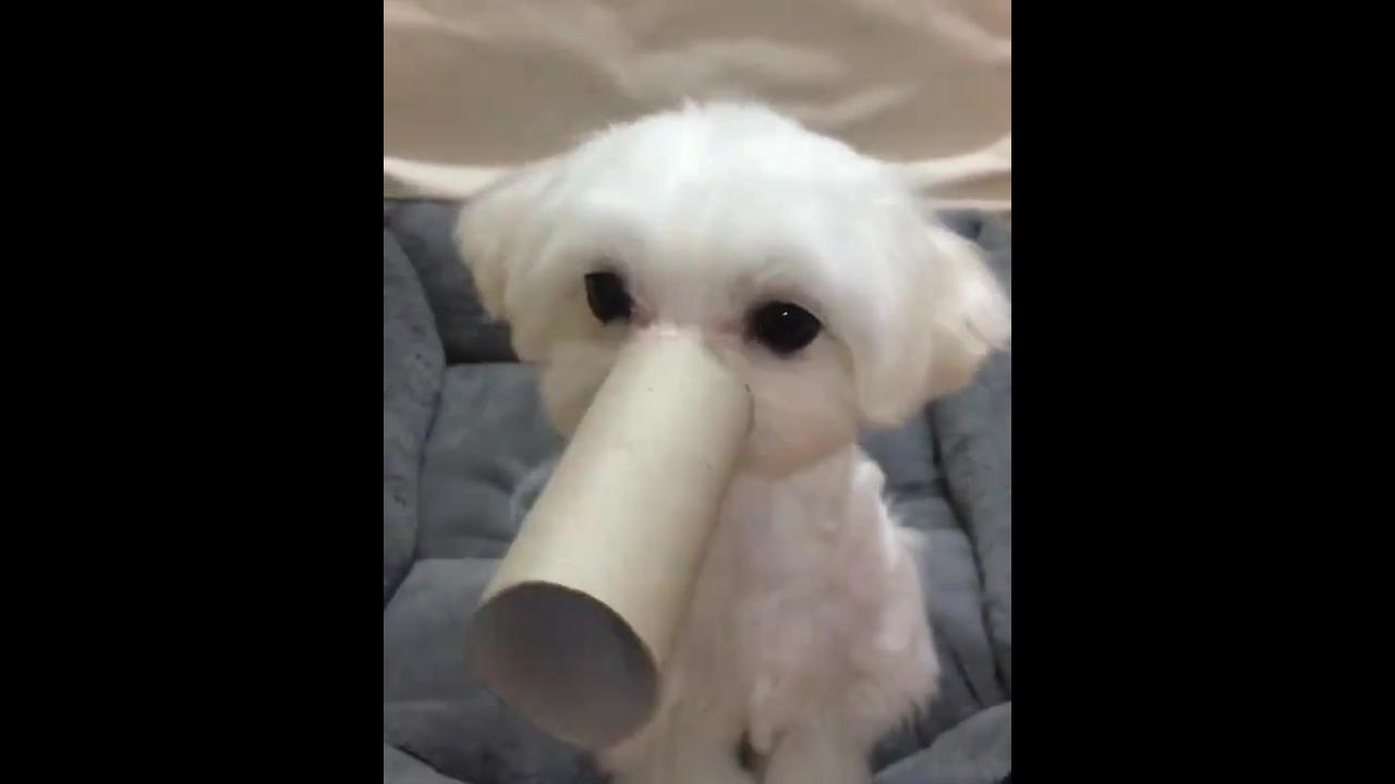 Cachorrinho brincando com sua dona