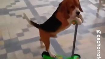 Cachorrinho Brincando De Andar De Patinete, E Não É Que Ele Consegue!