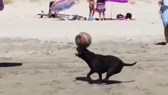 Cachorrinho Brincando De Bola Na Praia, Veja Como Ele Sabe Equilibrar A Bola!