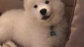 Cachorrinho Brincando De Esconder Com Seu Dono, Olha Só Que Lindinho!