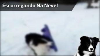 Cachorrinho Brincando De Escorregar Na Neve, Olha Só Como É Inteligente!