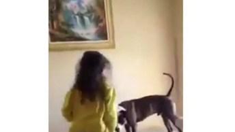 Cachorrinho Brincando De Pular Em Cima Da Cama Com Suas Amiguinhas!